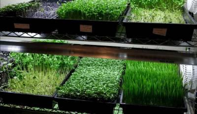Microgreen: naturalny biznes dla każdego