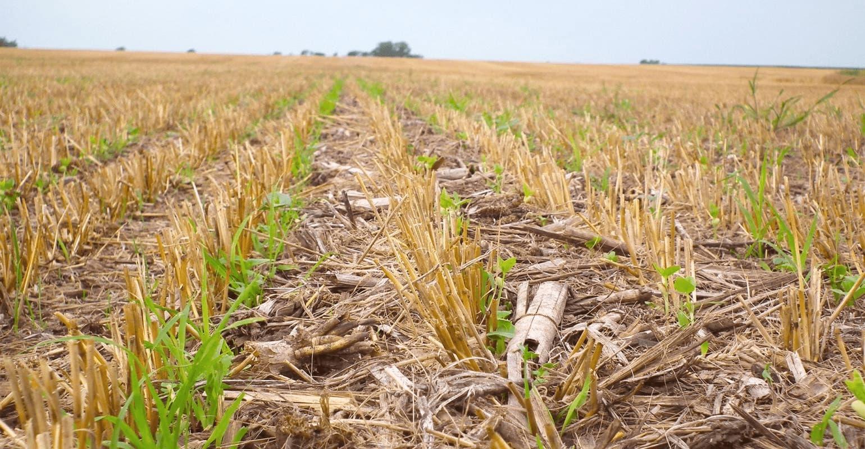 No-till: zalety i wady systemu uprawy roli