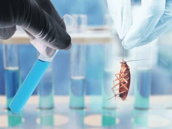 Ferma karaluchów to jeden z najbardziej dochodowych rodzajów agrobiznesu
